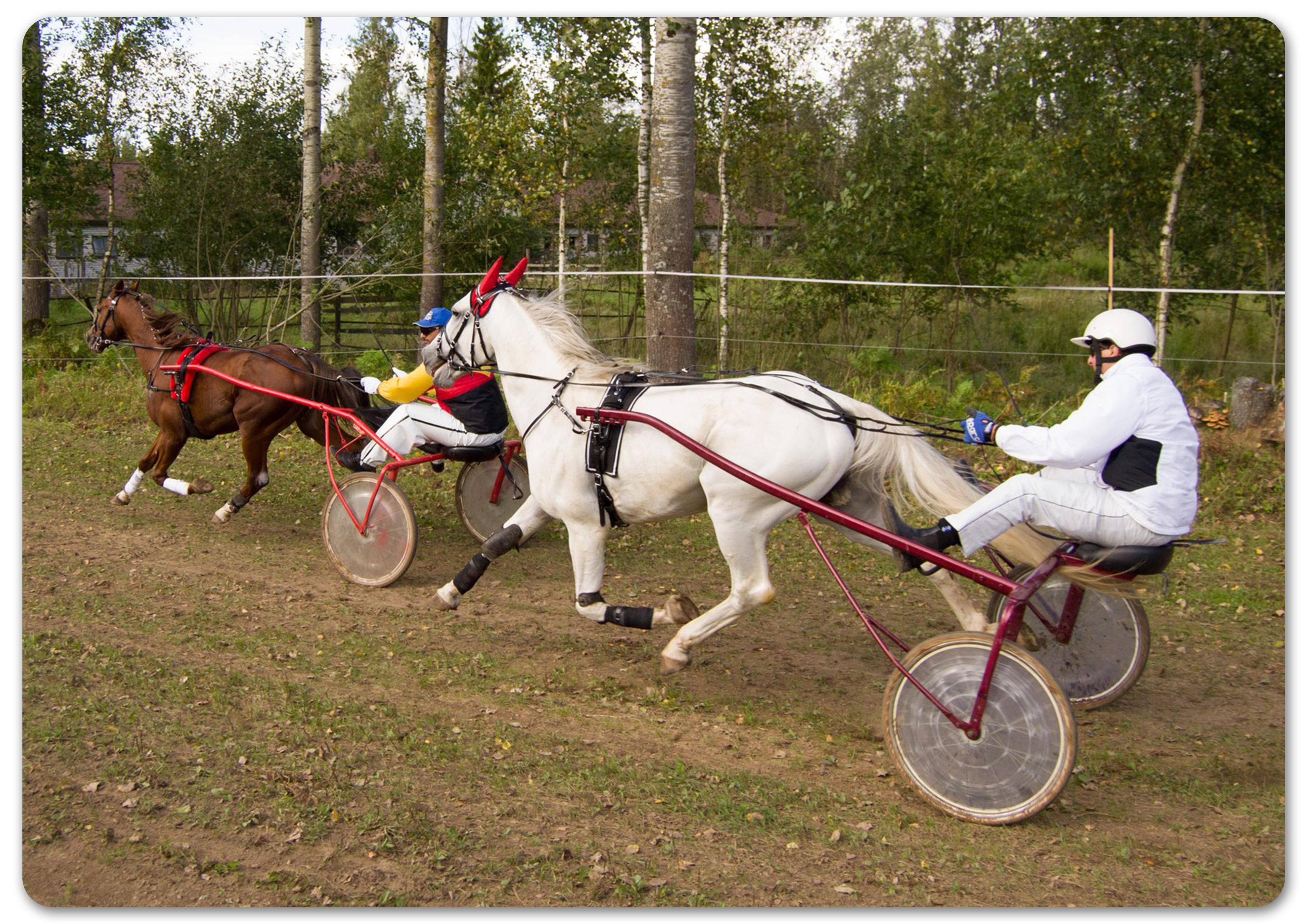 конные бега
