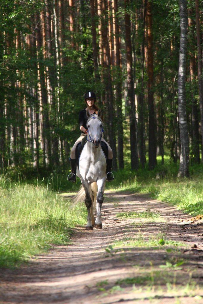 верховые прогулки в лес