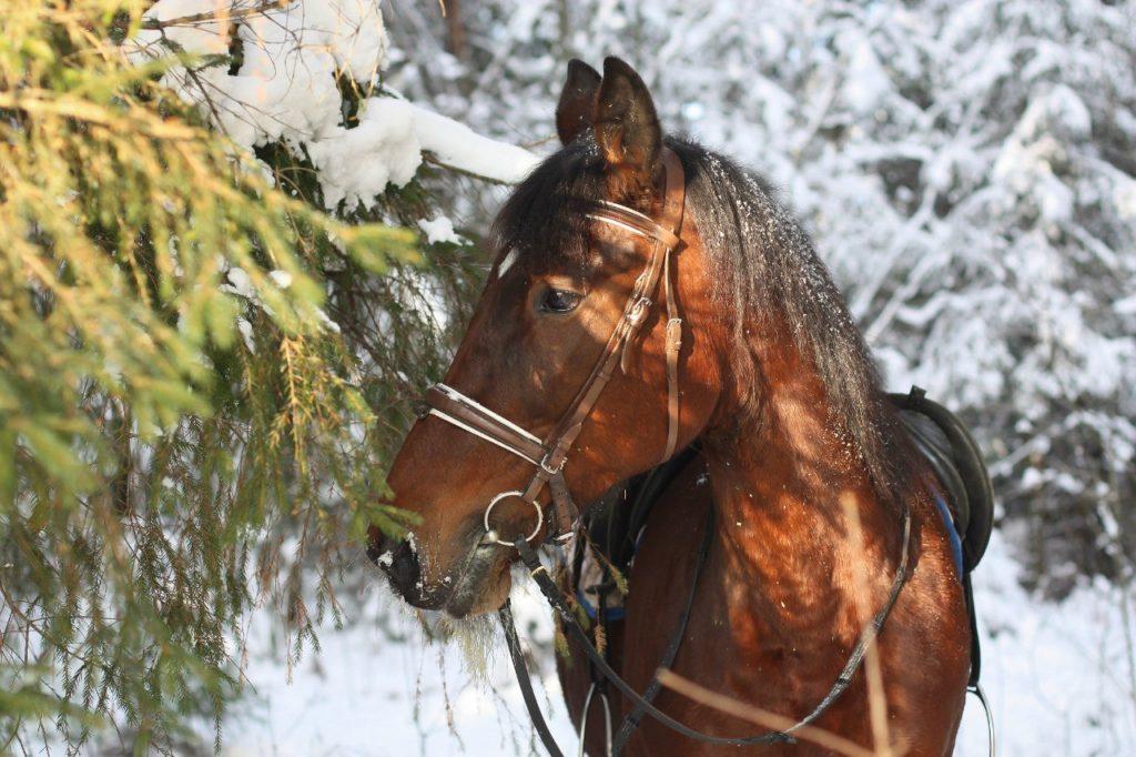 арендовать лошадь