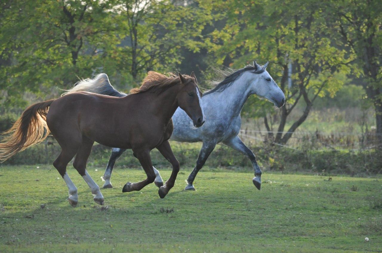 конный завод