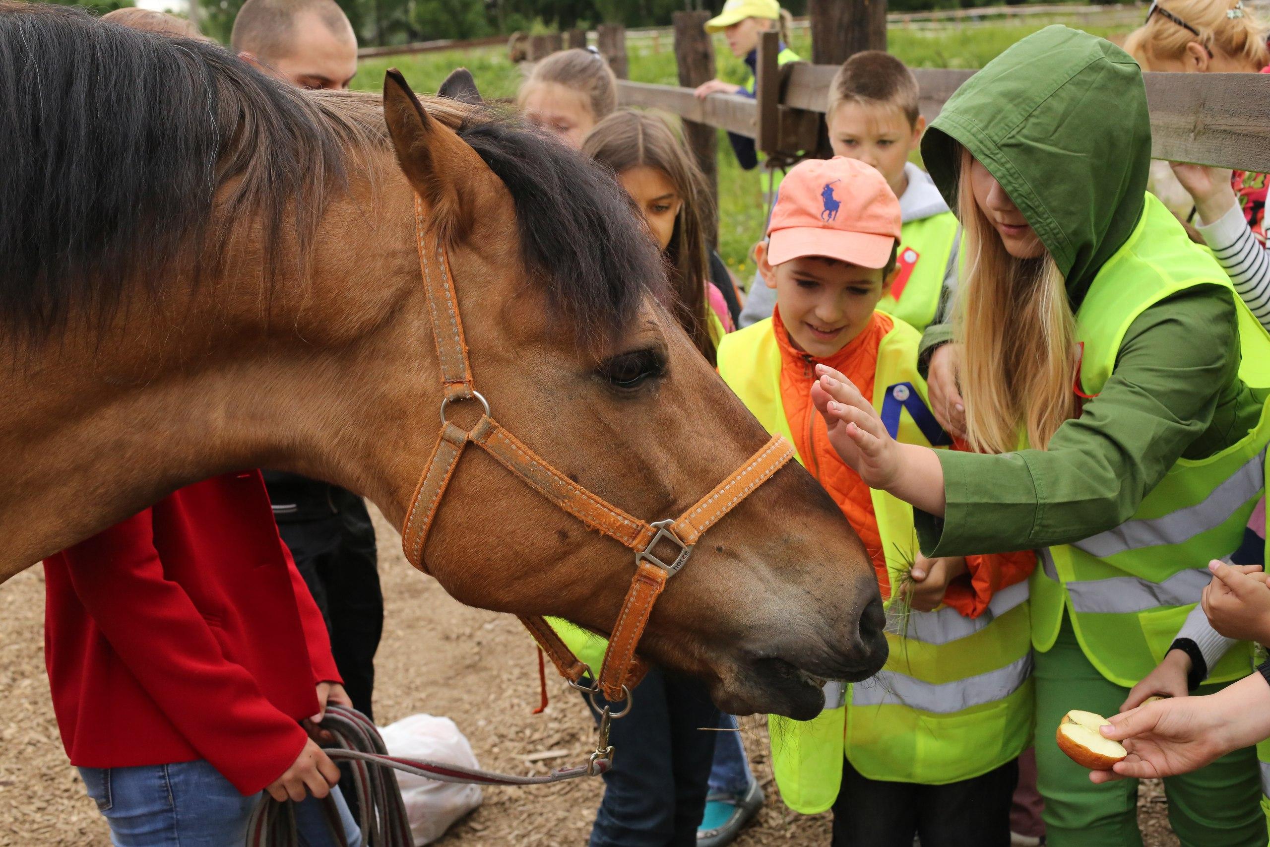 Экскурсии на конный завод