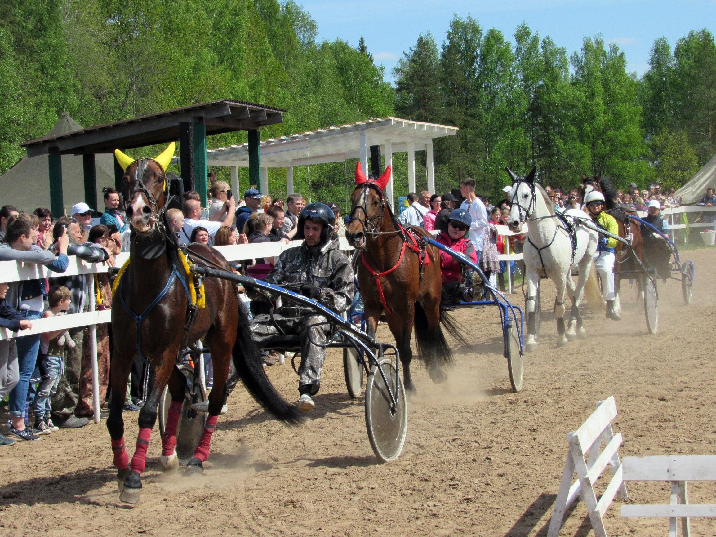 мероприятия на конном заводе